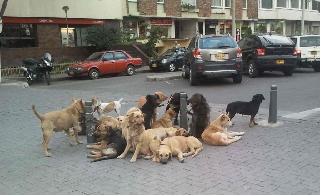 Hunde-in-Bogota